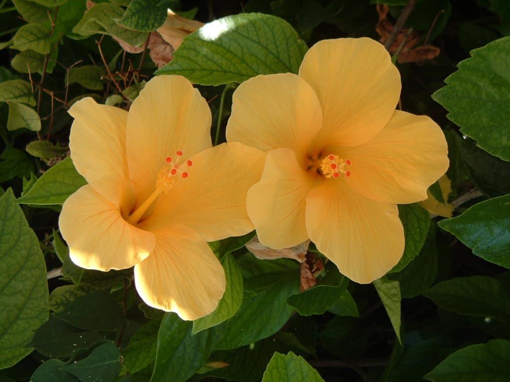 il giallo in natura