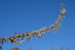 Arbusti rustici dell' appennino tosco emiliano