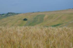 Alla scoperta delle Crete Senesi: colline dorate Tempo : 1/250 sec. Diaframma : F/8 Iso : 125 Distanza focale : 40 mm.