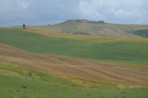 Alla scoperta delle Crete Senesi: colline striate Tempo : 1/250 sec. Diaframma : F/8 Iso : 110 Distanza focale : 50 mm.