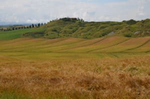 Alla scoperta delle Crete Senesi: colline coltivate a frumento e cereali Tempo : 1/320 sec. Diaframma : F/9 Iso : 100 Distanza focale : 48 mm.