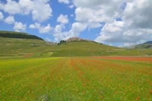 Fioritura nella piana di Castelluccio di Norcia Tempo : 1/320 sec. Diaframma : F/9 Iso : 100 Distanza focale : 18 mm.