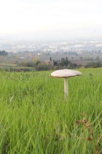 Il fungo 2