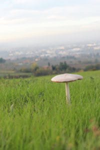 Il fungo 1