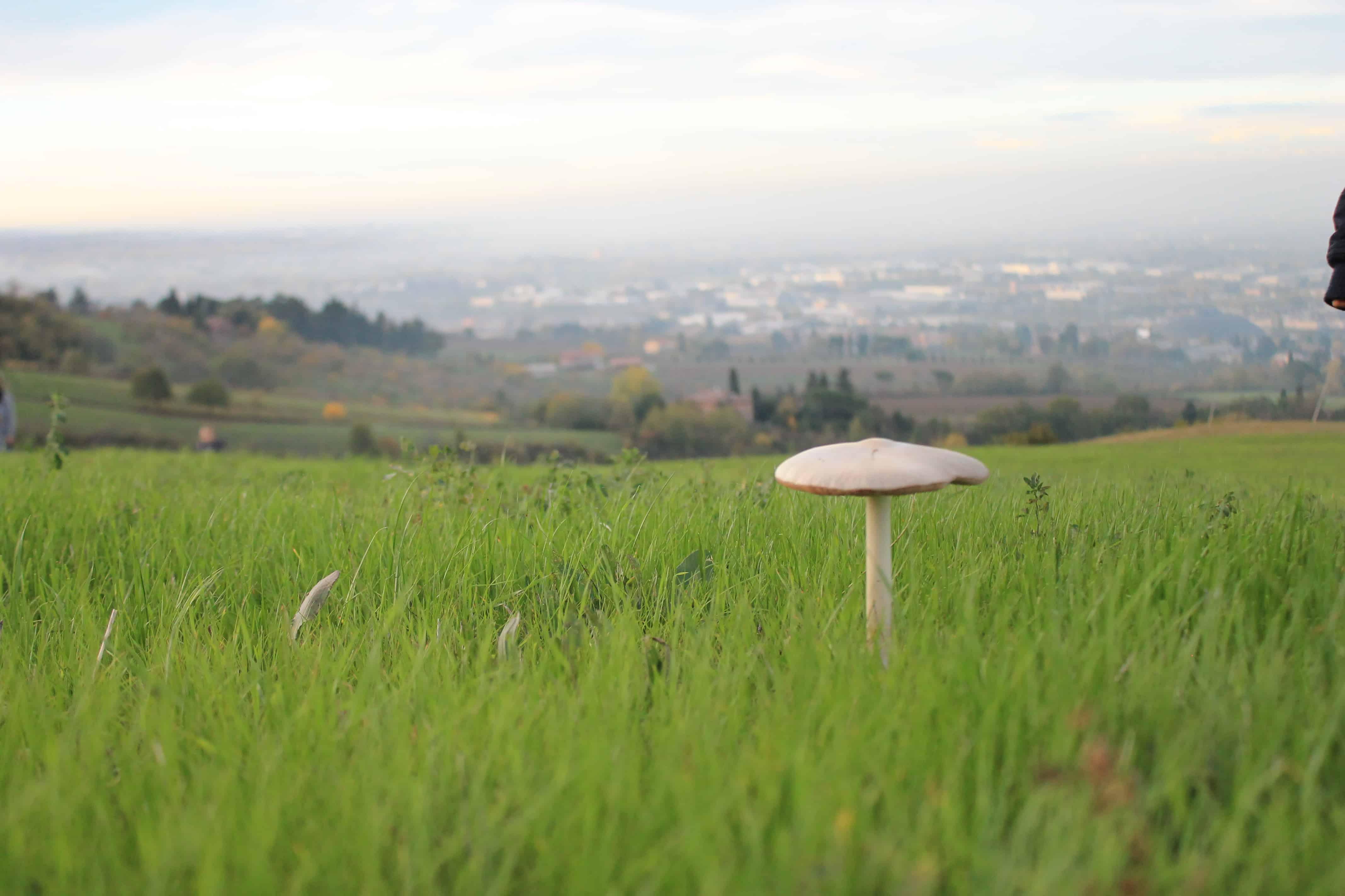 Il fungo sulla collina