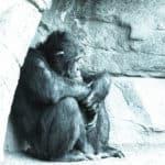 """""""Se le scimmie sapessero annoiarsi, potrebbero diventare uomini.""""  J.W.Goethe"""