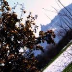 521b42812ba96-SilviaBenni_01